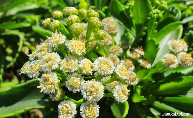 Petite fleurs sentier cap jaune