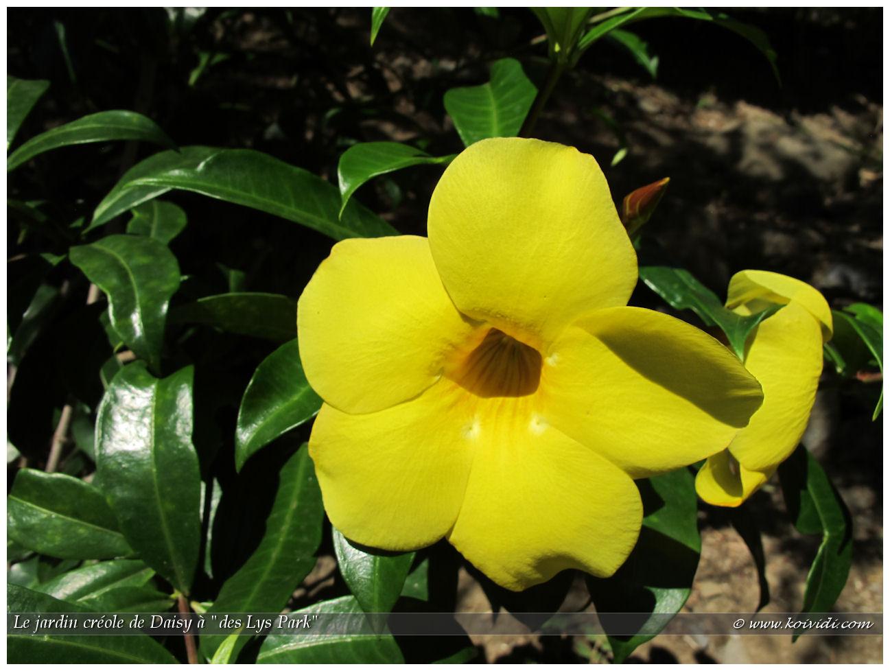 les couleurs du jardin creole la cour de daisy