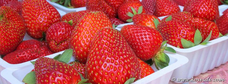 La fête de la fraise 2013 à Mont-Vert Les Hauts