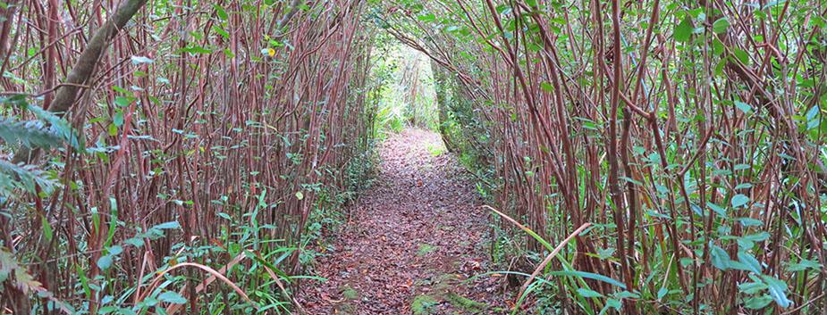 Randonnée : La grande boucle de l'Eden à Bras-Panon