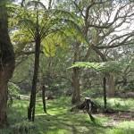 forêt de la Réunion