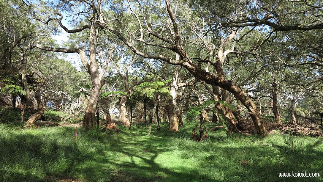 Forêt de la ravine  Blanche