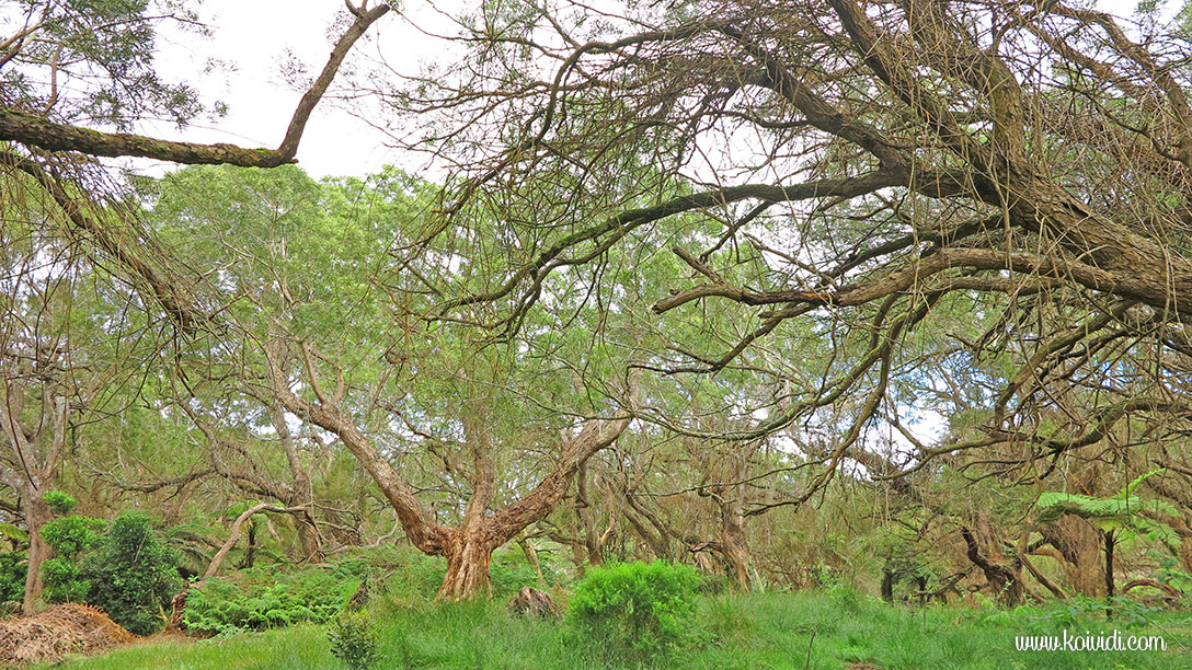 arbres la Réunion