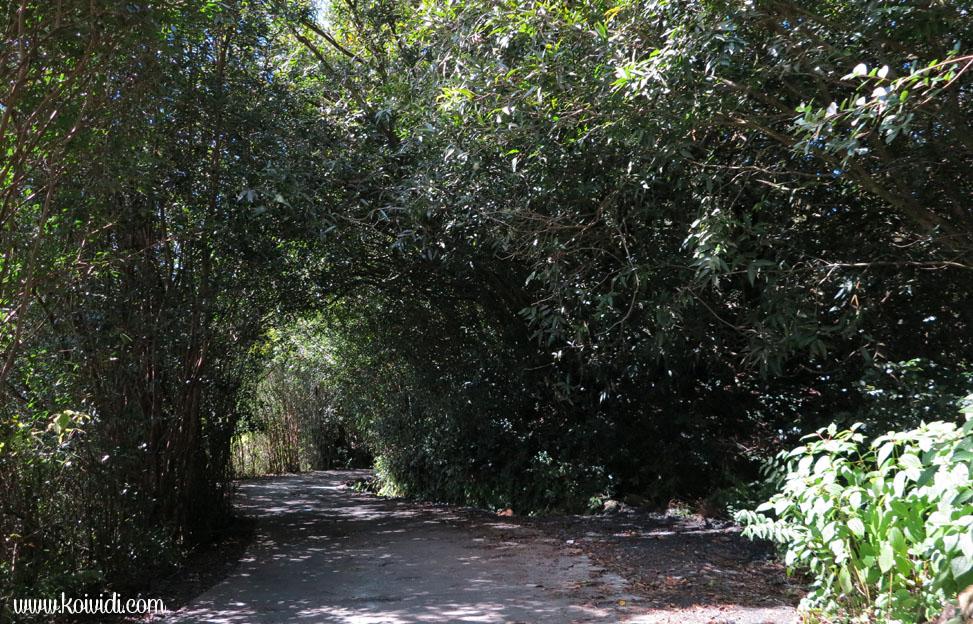 chemin Helvetia