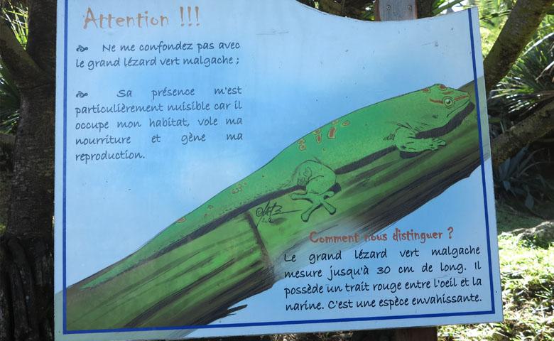 gecko vert malgache